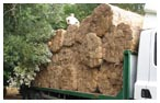 Thatching Materials